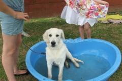 2013 Summer Fete & Dog Show